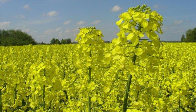 Piedalies kalendāra 'Latvijas Zelts' veidošanā!
