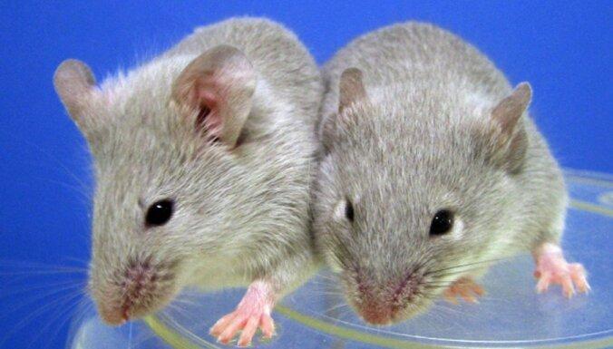 Эксперимент на мышах: люди смогут размножаться в космосе на МКС