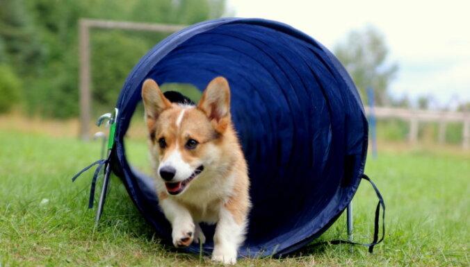 Kā rīkoties, lai dzīvnieku patversmē paņemtie mīluļi nebūtu jāved atpakaļ