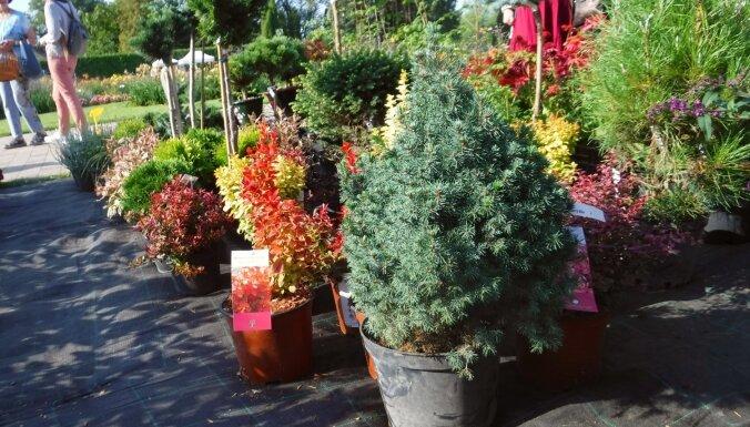 Nacionālajā botāniskajā dārzā atcelts tradicionālais Cīruļu dienas stādu tirgus