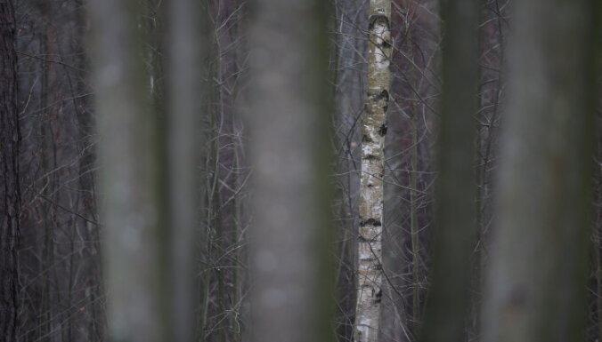 Puse no 100 lielākajiem mežu īpašniekiem – ārvalstnieki, liecina pētījums