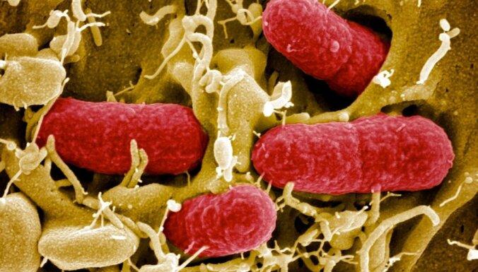 Германия нашла причину заражения кишечной инфекцией