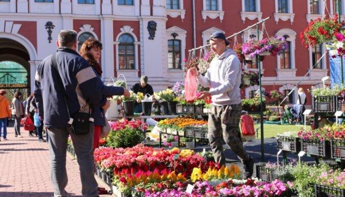 Foto: Dārza labumi Salaspils un Jelgavas stādu tirdziņos