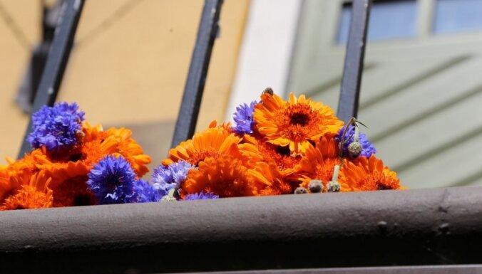 Foto: Pie Nīderlandes vēstniecības Rīgā gulst ziedi saistībā ar traģēdiju Ukrainā