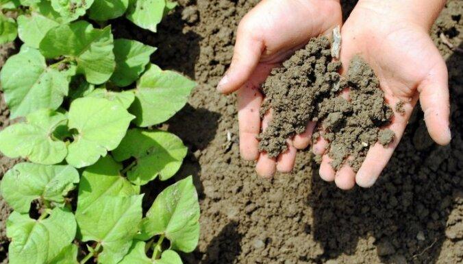 Как оживить закисшую почву?