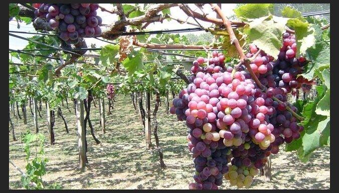 Četri galamērķi laba vīna cienītājiem tepat Latvijā