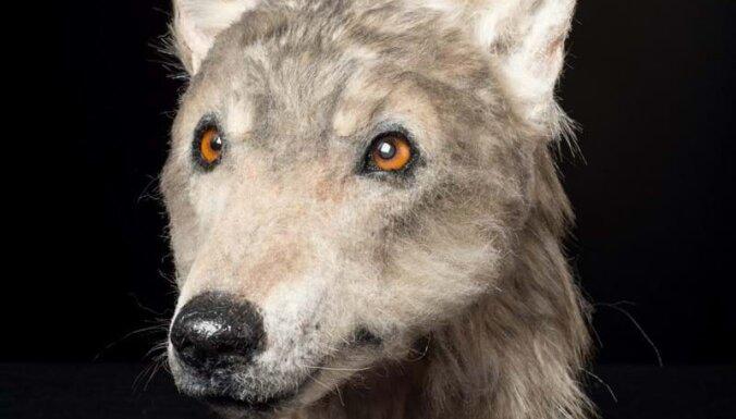 Ученые воссоздали морду собаки, обитавшей 4000 лет назад