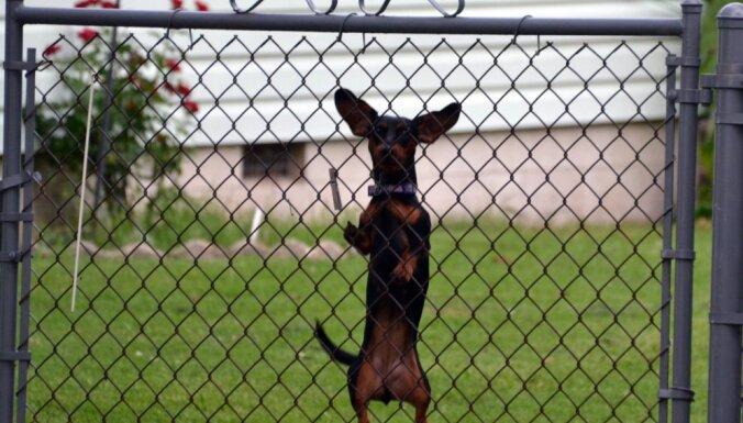 Агрессивные собаки покусали в прошлом году 10 почтальонов