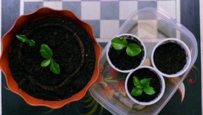 Готовим рассаду зимой. Шесть основных советов для проращивания семян в помещении