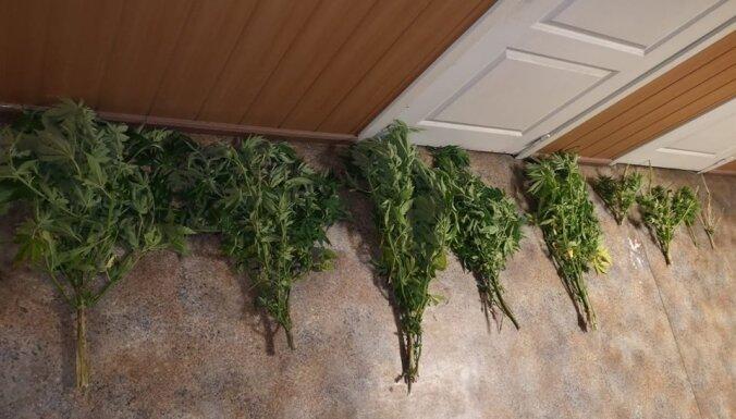 В лесу под Юрмалой нашли наркотики: полиция изъяла более 1 кг сырой марихуаны