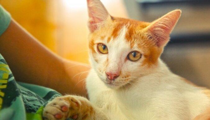 Kādēļ kaķi ir apsēsti ar padusēm