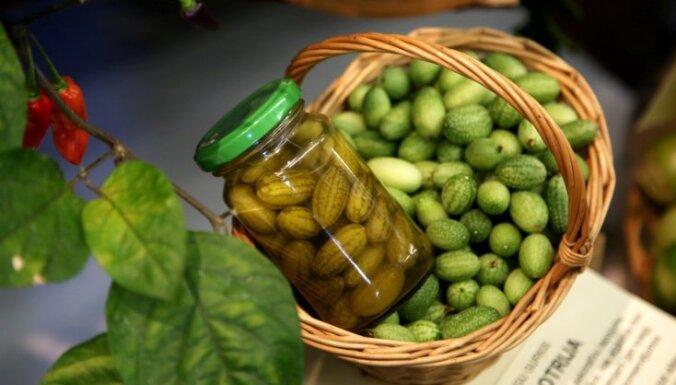 Foto: Reti audzēti dārzeņi un aromātiski garšaugi – rudens velšu izstāde Dabas muzejā