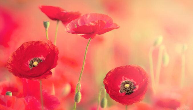 Puķu dārzs liesmaini sarkanos toņos: kā izveidot un kopt?