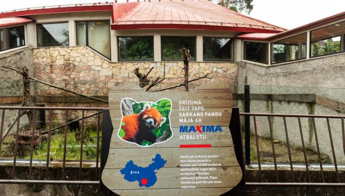 В Рижском зоопарке начались работы по строительству Дома для красных панд