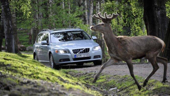 'Balta': Šogad atlīdzībās par auto sadursmēm ar dzīvniekiem izmaksāts jau pusotrs miljons eiro