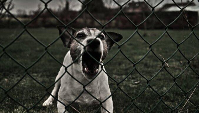 Mazu zēnu sejā un rokā sakož kaimiņu suns