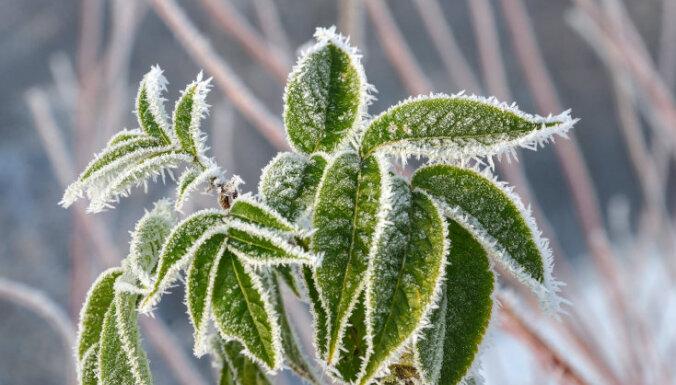 Синоптики: в Латвии прохладная погода сохранится до мая