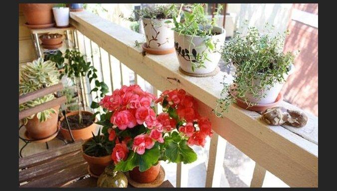 Kā iekārtot vasaras paradīzi uz balkona vai lodžijas