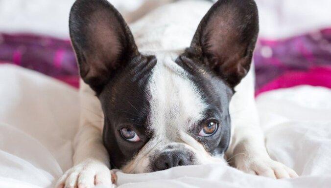 Svētā mierā! Suņi, kurus dzīvē maz kas satrauc