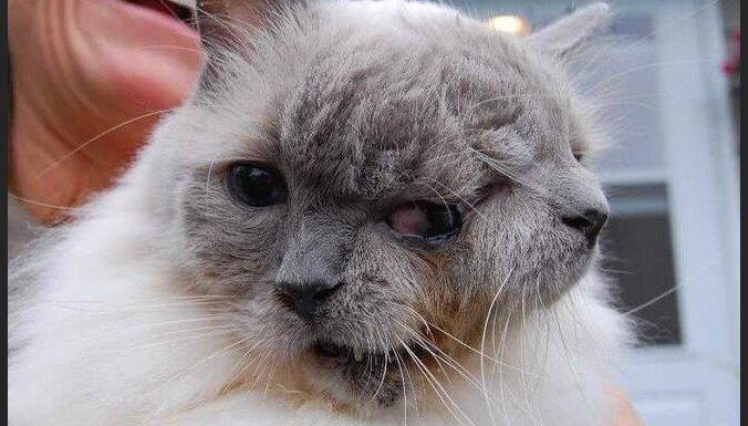 Двухмордый кот попал в Книгу рекордов Гиннесса