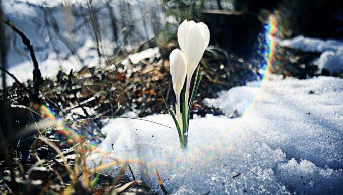 Neatkarības atjaunošanas dienā citos gados bijis gan sniegs un krusa, gan karstums