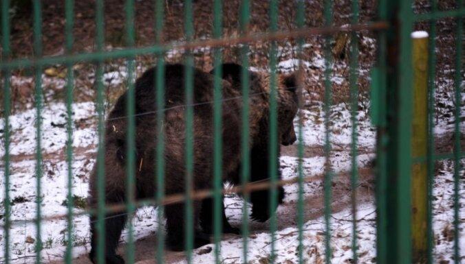 Фото: лигатненские медведи переселились в новый вольер