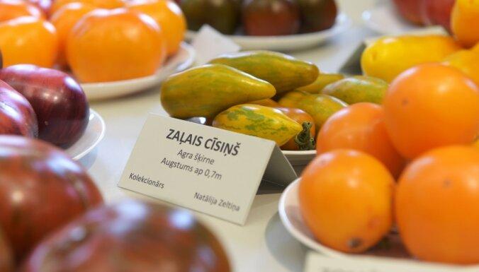 1. martā Rīgā notiks Latvijā audzētu sēklu gadatirgus