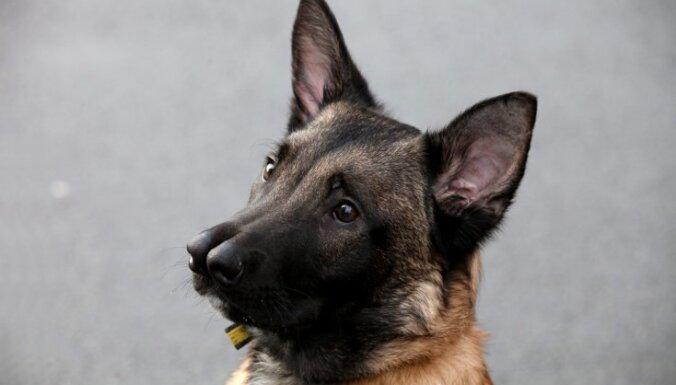 Suns ar diviem deguniem beidzot atrod mājas