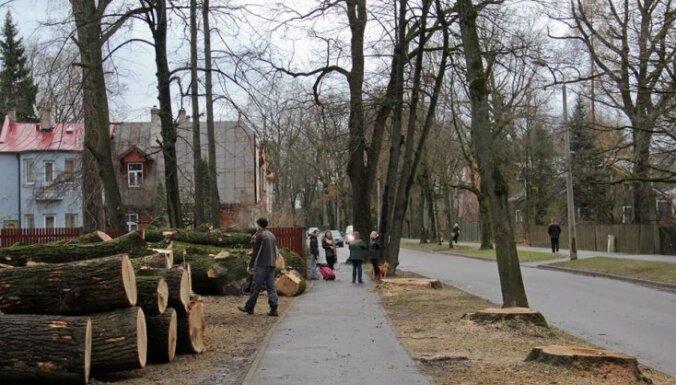Koku izcirtējam Kuldīgas ielā piemēro 70 eiro sodu