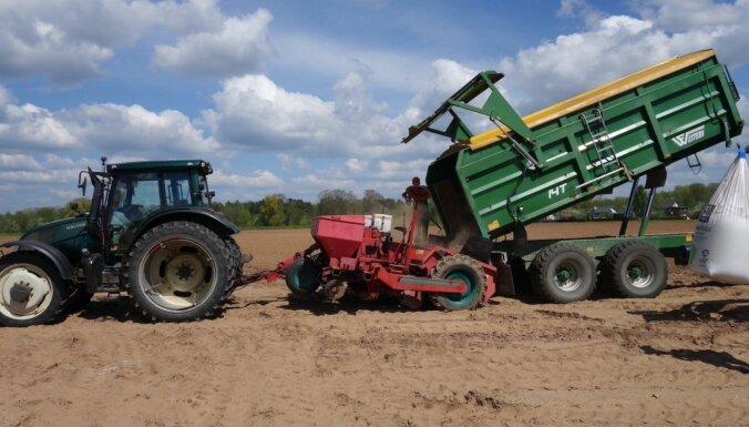 'Ādažu Čipsu' ražošanai šogad plāno iestādīt 75 hektārus kartupeļu