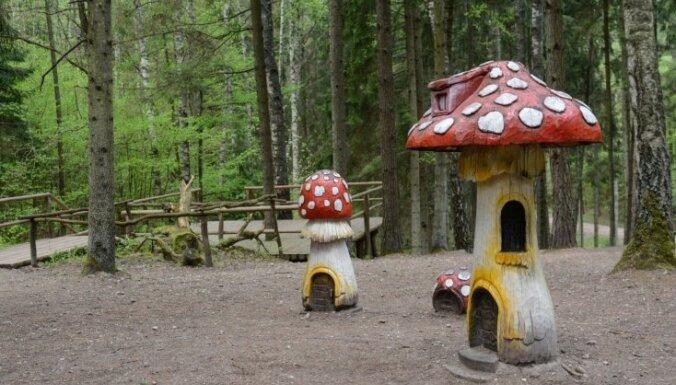 Dabas takas, piknika vietas un citas aktivitātes: idejas mierpilnai atpūtai dabā
