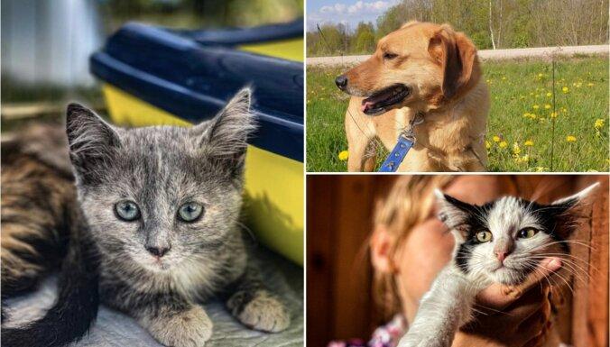 Iepazīsties! Trīs kaķi un divi suņi, kas meklē saimnieku