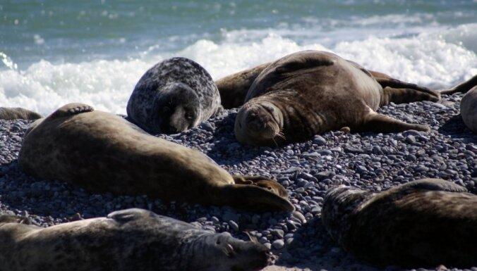 Divas dzērušas sievietes ASV piekauj roņus