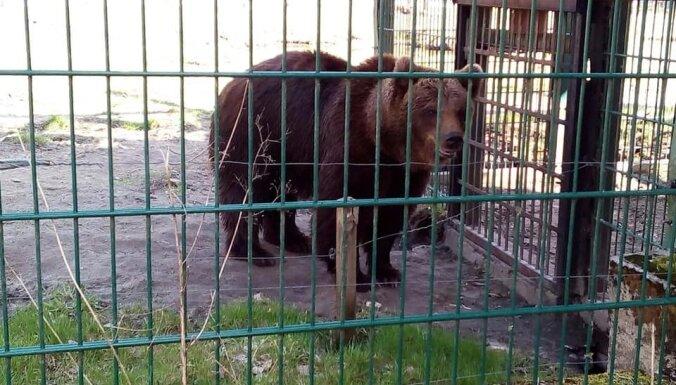 'Mežavairogi' aicina vest dārzā izaudzētos gardumus lāču barošanai