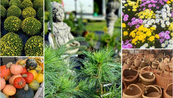 Foto: Krāšņi augi un retumi grandiozajā Latvijas Stādu parādē