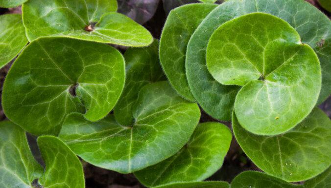 Встали на сторону тьмы: 9 растений, которым лучше всего в тени