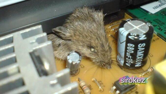 Принтер насмерть раздавил мышь (видео)