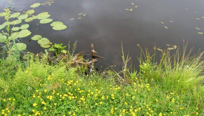 В городском пруду в Калининграде завелись пираньи