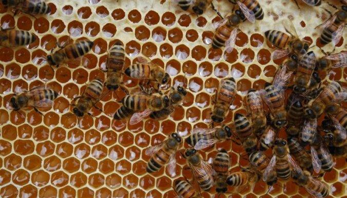 ES aizliegs bišu bojāejā vainotu pesticīdu lietošanu