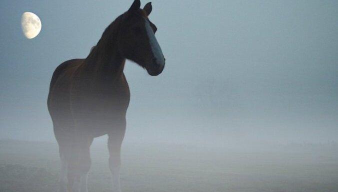 Отец и сын спасли тонущую в болоте лошадь