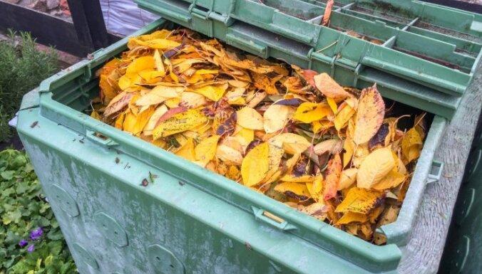 Сдаем опавшие листья: куда конкретно в Риге это можно сделать