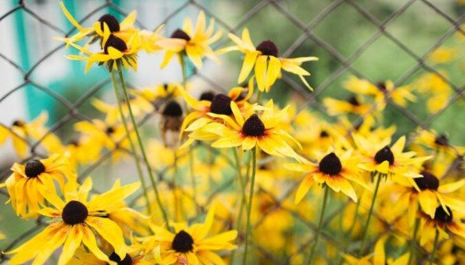 18 augi, bez kuriem skaistais vasaras dārzs nav iedomājams