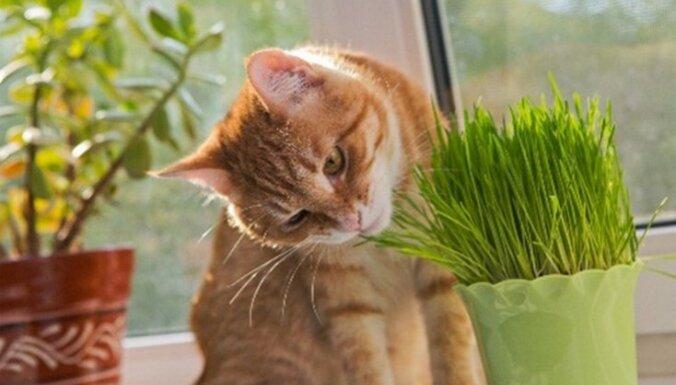 Эксперт объясняет – полезно ли кошкам есть траву?