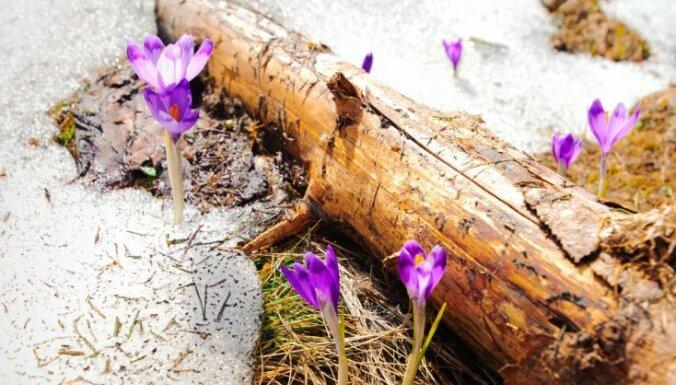 Dārza darbu kalendārs: marts