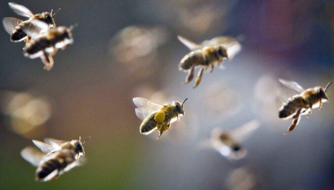 Установлена причина массовой гибели пчел в Эстонии