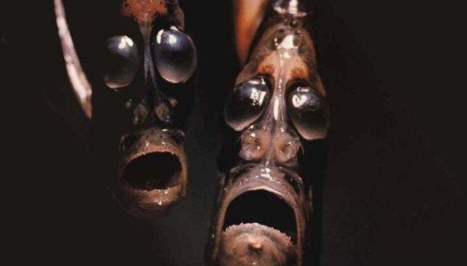 Самые уродливые создания, живущие в океане