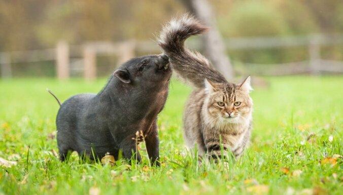 Nenovērtē par zemu: dzīvnieki, kas var būt gudrāki par tevi