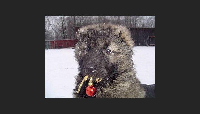 """Foto: dzīvnieku patversme """"Dzīvnieku Draugs"""""""