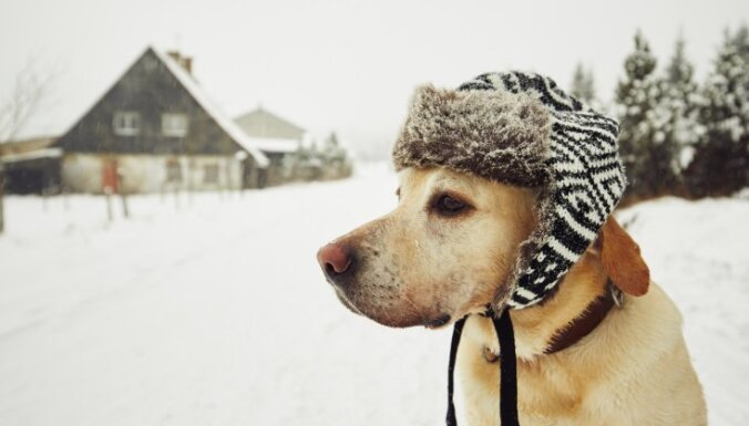 Человеческий возраст вашей собаки: новая научная формула подсчета