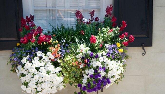 Noskaidroti konkursa 'Re, kā zied!' uzvarētāji!
